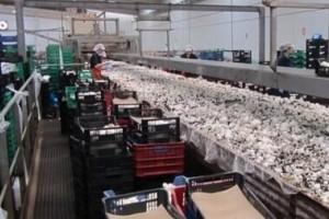"""宋益胜:我国蘑菇栽培者一味贪大求洋,一味迷信所谓的""""工厂化生产造成企业自身困境"""