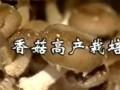 香菇高产栽培技术 (355播放)