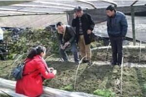 古田县菌业研究院院长胡开辉莅临指导羊肚菌生产