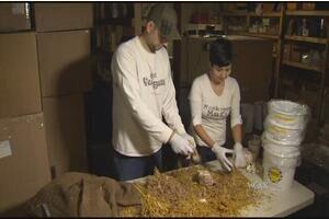 美国:夫妇在地窖种植蘑菇赚取额外利润