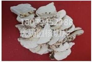 林大大牌虎奶菇菌核产品详细简介