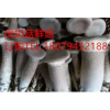 江西抚州临川虎奶菇鲜菇