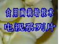 菌草栽培食用菌 (213播放)
